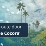 Valle de Cocora Tips beste hike Salento