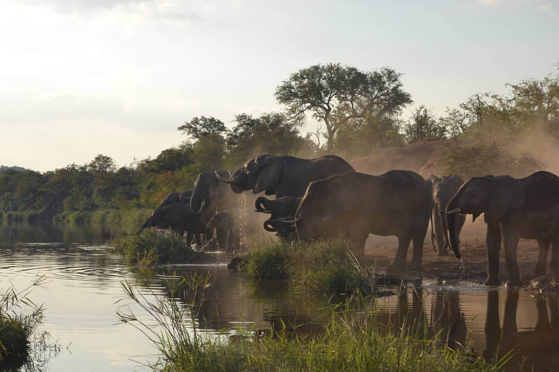 Kruger Park Bezoeken beste safari- Olifanten