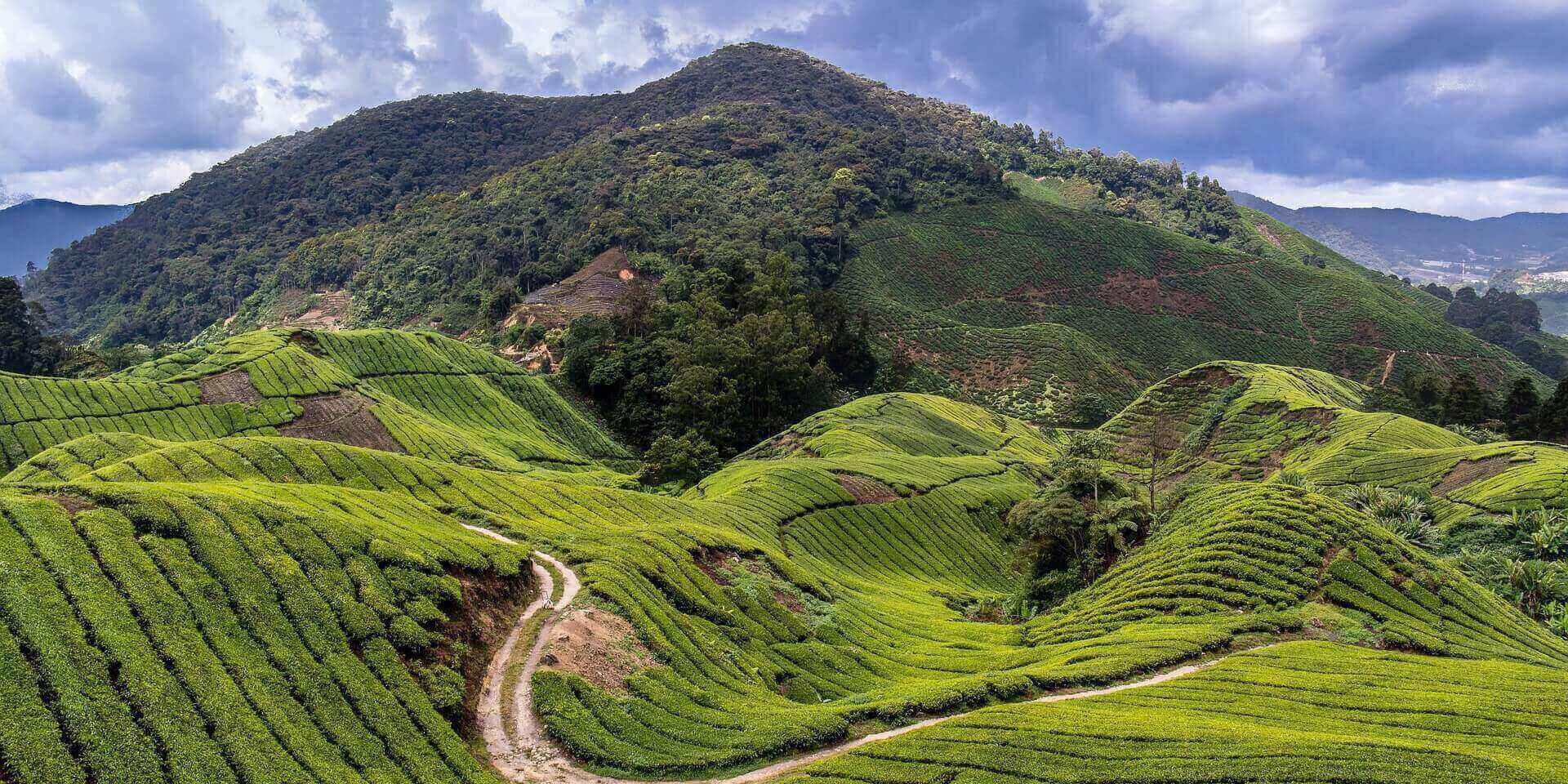 Cameron-Highlands-reisroute-maleisie